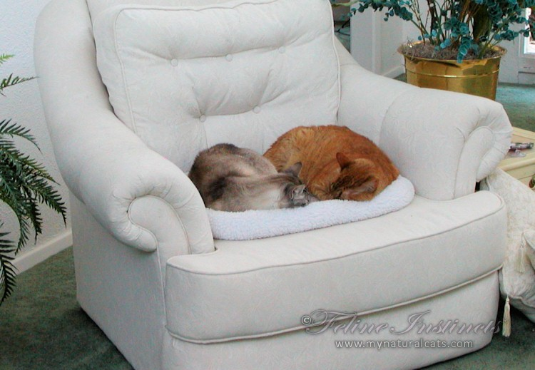 catstogether-013