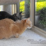 catstogether-002