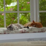 catstogether-008
