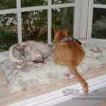 catstogether-010