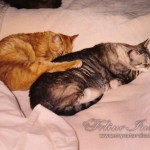 catstogether-019